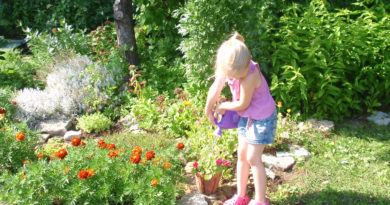 Maksa ravi japuhastus taimedega